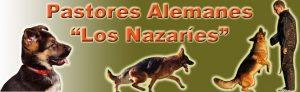 Sobre los perros pastores alemanes